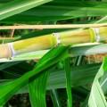 Química e Derivados, Perspectivas 2016 - Álcool: Gasolina cara permitiu avanço do etanol, mas endividamento alto preocupa os produtores